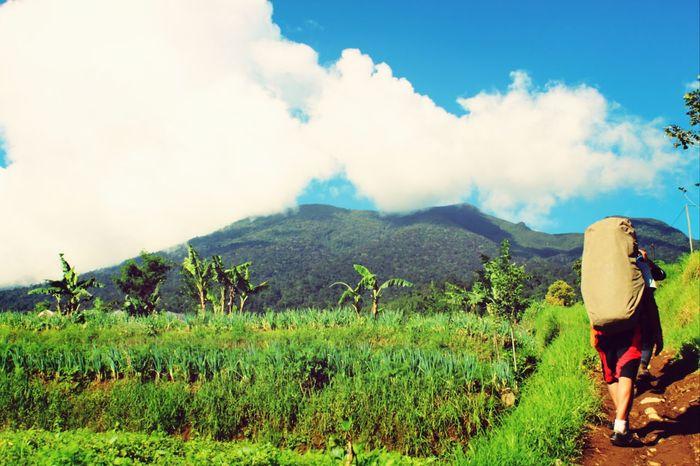 love Indonesia Gedepangrango Mountainhike Hiking Wonderful Indonesia