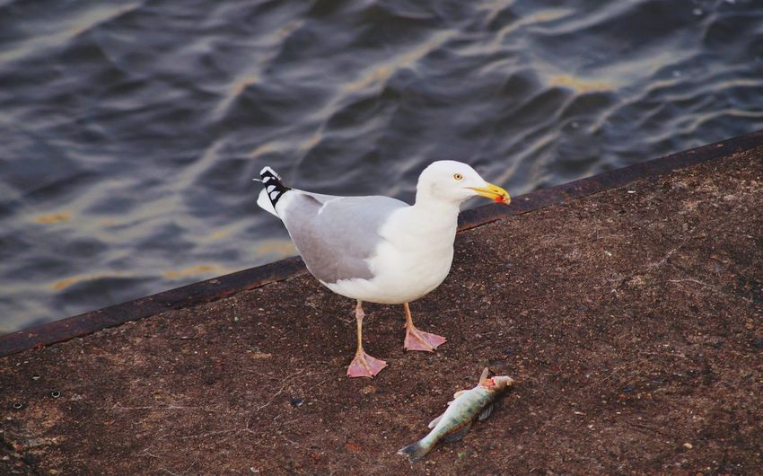 High angle view of seagull perching on land