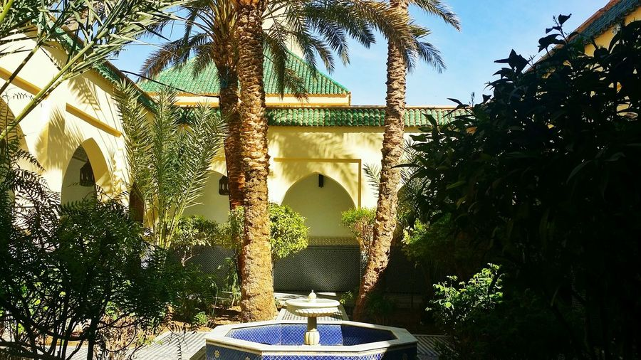Breathing Space Arch Architecture Tree Built Structure No People Day Outdoors Oasis Morocco EyeEmNewHere in Moulay Ali Chrif Errachidia Morocco