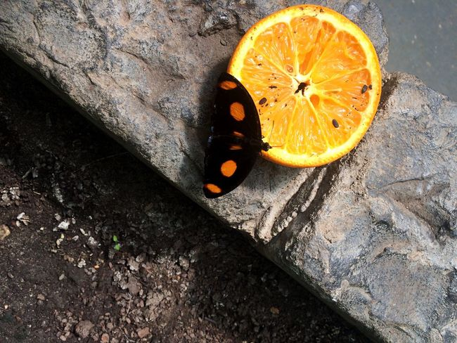 Orange County #juice  #breakfast #Nature  #butterfly Orange Color Fruit High Angle View Sunlight No People First Eyeem Photo