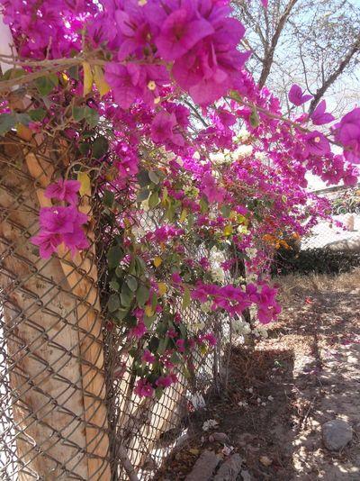 Oasis Huacca