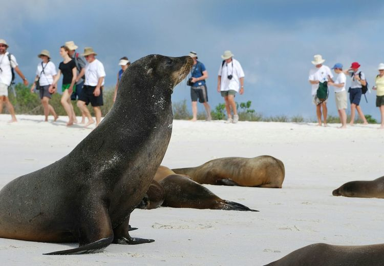 Sea lions with people on beach in galapagos islands