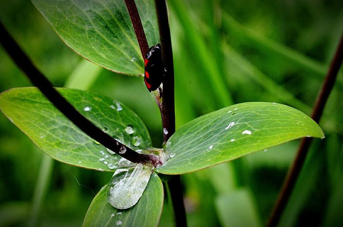 Bug Beetle Froghopper Leaves Weeds Water Droplets Rain Drops On Leaves In The Countryside Nature Nature Photography EyeEm Nature Lover Nikon D3200