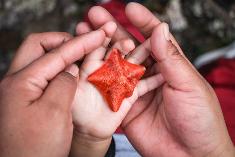 baby starfish Starfish  Hand Hands Mom Son Holding Fragility Fragile Sealife Wildlife Nature Tidepools Ocean Beach Exploring New New Life Curiosity Human Hand Red Holding Close-up Palm Human Finger Thumb Index Finger Cropped Finger Personal Perspective Fingernail