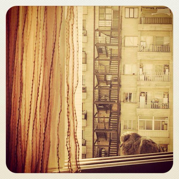 Bird Outside My Window Mhdphotography