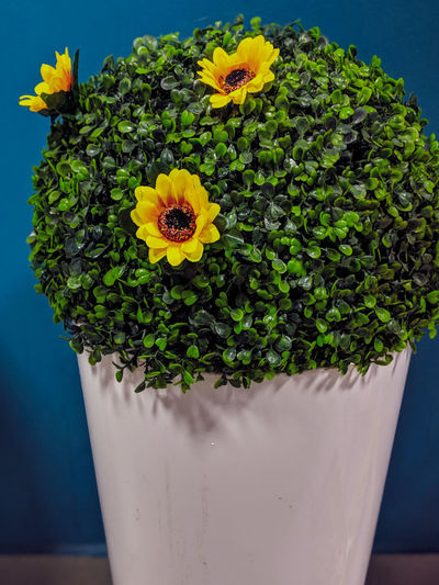 Close-up of potted plant in vase