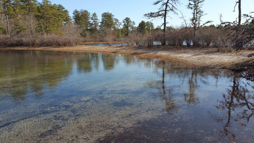 At my Sacred place. Round Pond Three-cornered Pond the Pine Barren