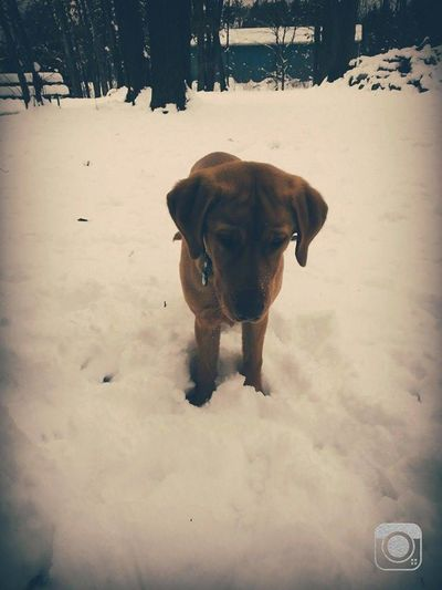 Animal Canine Close-up Dog Domestic Animals Outdoors Pets Puppy Season  Snowy Bliss