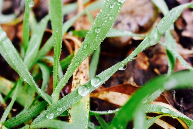 Drops Nature Plant Growth Green Color Close-up No People Water Outdoors