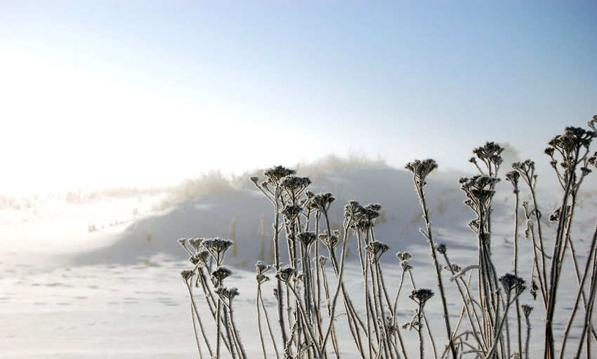 Frost Beauty In Nature Clear Sky Climate Cold Temperature Copy Space Covering Day Environment Land Nature No People Outdoors Plant Scenics - Nature Sky Snow Snowing Tranquil Scene Tranquility White Color Winter