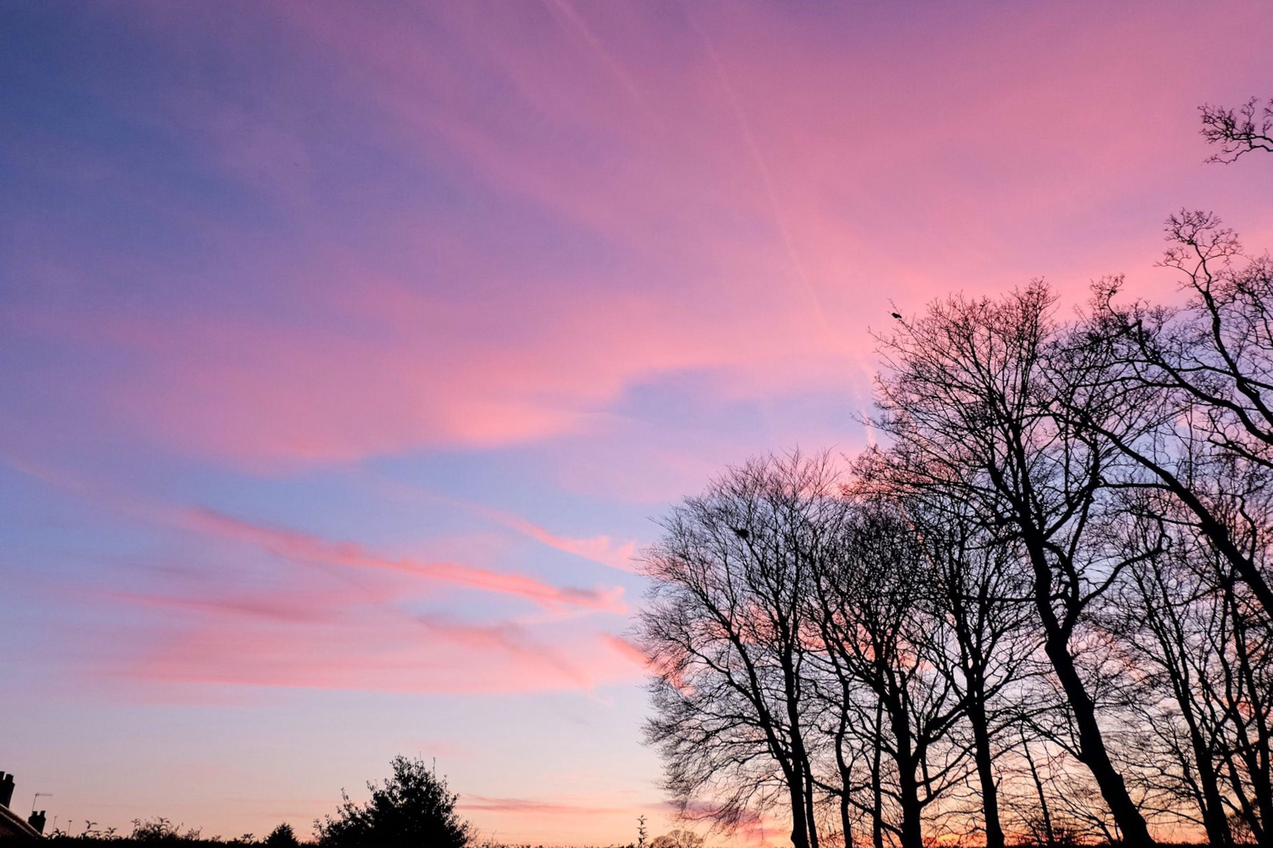 sunset, silhouette, tree, sky, tranquility, scenics, beauty in nature, tranquil scene, orange color, low angle view, nature, bare tree, cloud - sky, branch, idyllic, cloud, dramatic sky, outdoors, no people, dusk