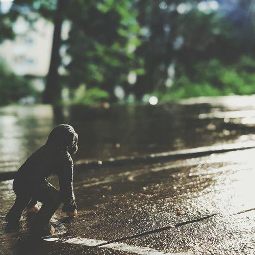 Little Tiny Schimpanse Watching the sun rise. Little Animals Schimpanse TheSunRising