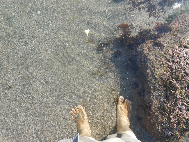 barefoot Body Part Day High Angle View Human Body Part Human Foot Human Leg Land Leisure Activity Lifestyles Low Section Nature One Animal One Person Outdoors Personal Perspective Real People Standing Water The Still Life Photographer - 2018 EyeEm Awards