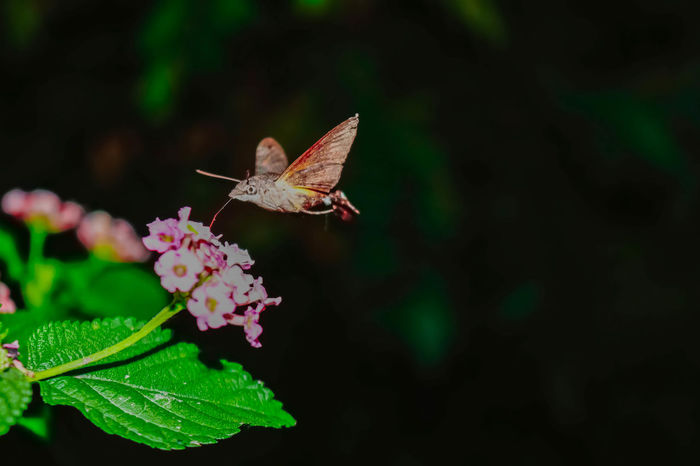 Animal Themes Animals In The Wild Beauty In Nature Butterfly - Insect Canon80d Canonindia Close-up Day Flower Flower Head Fragility Freshness Green Color Growth Insect Lantana Camara Leaf Nature No People One Animal Outdoors Plant Pollination