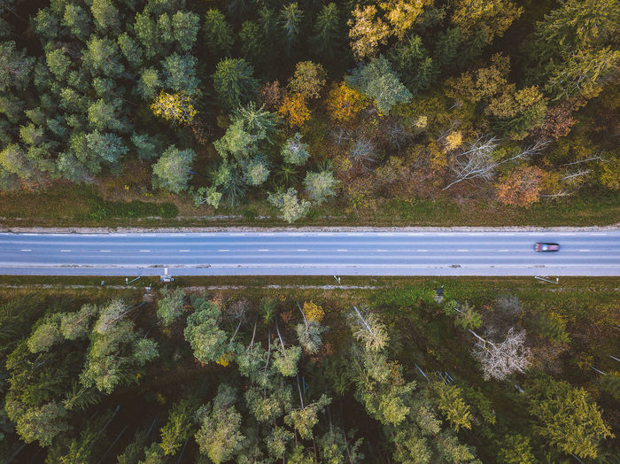 Directly above shot of road amidst trees at forest