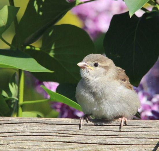 Sparrow Bird Animal Themes Animal Animal Wildlife One Animal Vertebrate Animals In The Wild