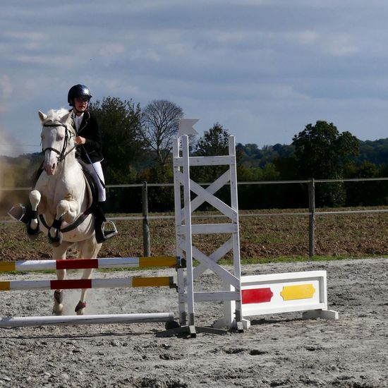 Concours Saut D'obstacle Cheval Creme Cheval Blanc Cheval
