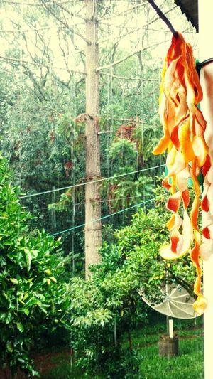 Tree Hanging Sculpture Human Representation Close-up Green Color