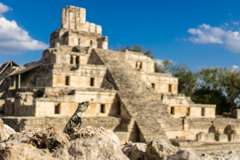 Leguan with first row view Ancient Ancient Civilization Archaeology Architecture Best View Famous Place First Row First Row View Leguan Leguan With View Mayan Ruins Old Ruin Ruins Tonina, Chiapas Travel Destinations