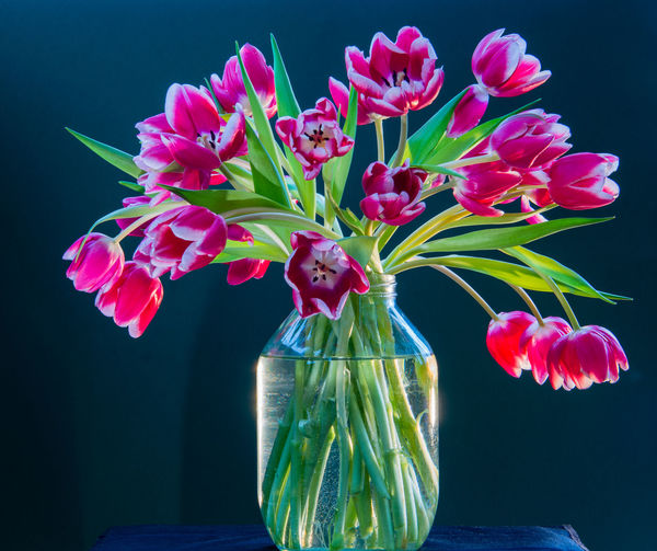 It's raining outdoors, so here is a still life of tulips to brighten up the day. Flower Flowering Plant Plant Vase Freshness Beauty In Nature Flower Head Indoors  Plant Part Flower Arrangement Tulips Tulips Flowers Still Life Still Life Photography Glass Vases Glass Vase With Flowers Colours Glass - Material Flower Photography