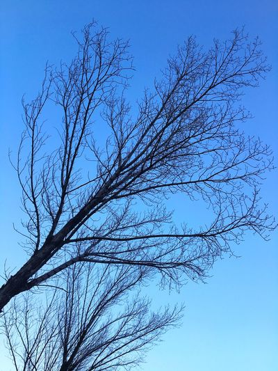 Reach for the sky Branches Tree Branches Bare Branches Bare Tree Tree Low Angle View No People Sky Nature Beauty In Nature Day Clear Sky Blue Outdoors Branch Freshness