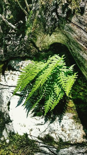 Nature High Angle View Growth Outdoors Green Color Day Leaf Plant No People Beauty In Nature Close-up Freshness