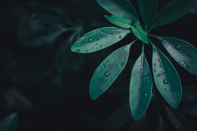 Leaf Plant Part Drop Plant Growth Wet Water Close-up Beauty In Nature Green Color Nature Focus On Foreground No People Freshness Rain Outdoors Day Vulnerability  Purity Dew RainDrop Leaves Rainy Season