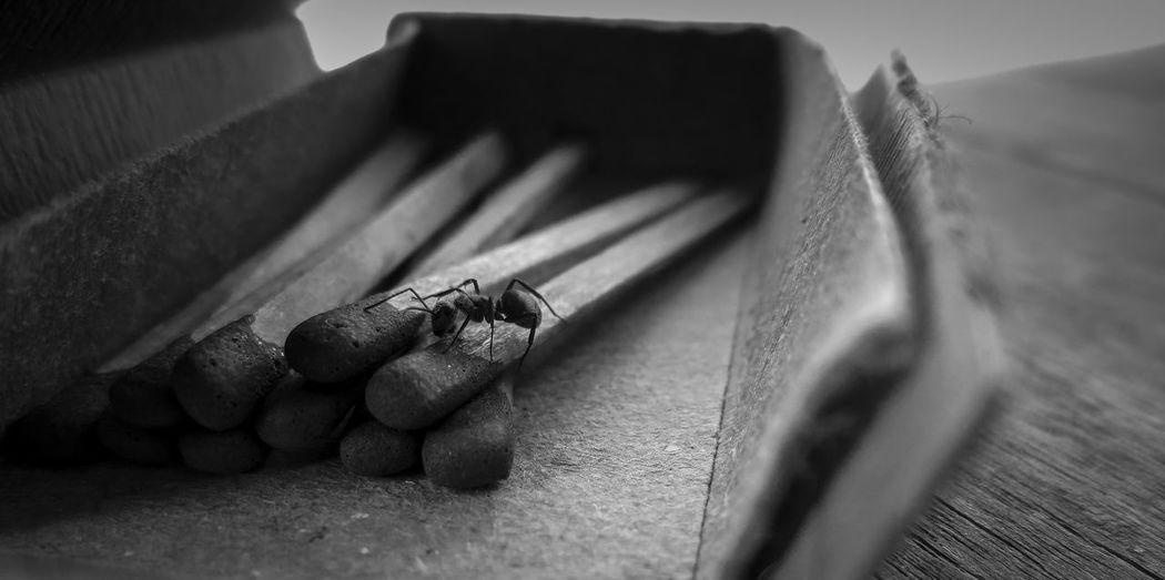 #BW Society #Wood #ant #beautiful #bnw #bnw_worldwide #bnwpho #bw #bw #bnw #BWcollaboration #istanbul #blackwhite #blackandwhite #bw_nature #bwphotograph