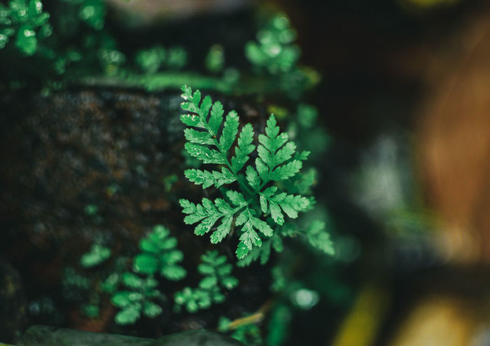 Beautiful EyeEm Best Shots EyeEm Best Shots EyeEm Selects Green Beauty Tree Leaf Close-up Plant Green Color Fern Botanical Garden Tropical Flower Plant Life Growing Moss Flowering Plant Plant Part In Bloom Botany Leaf Vegetable Reykjavik Fungus Blooming Frond Toadstool Dahlia Young Plant