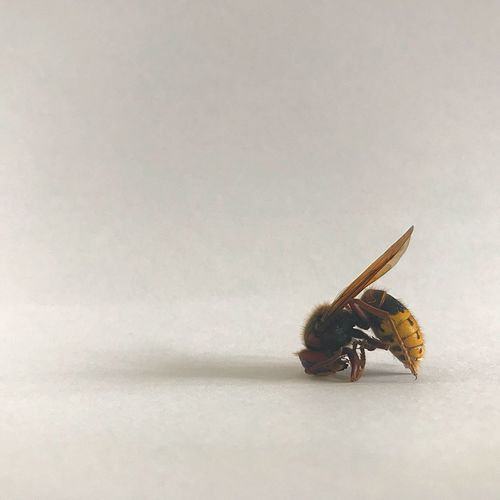 Yoga Yoga Wasp EyeEm Selects Animal Themes Animal Invertebrate Insect Animal Wildlife Animals In The Wild Close-up