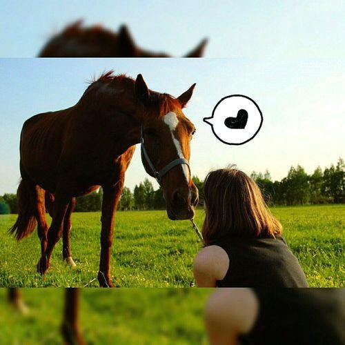 конныйспорт One Animal Day Sky лошадь лошадка красота Beauty Beautiful Love ♥ Ilikehorse First Eyeem Photo Live For The Story