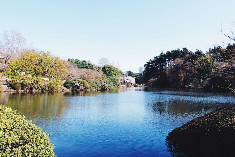 EyeEm Tokyo MeetUp 12 Urban Spring Fever Cherry Blossoms Sakura2016 Sakura Spring Vscocam VSCO