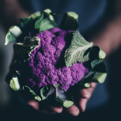 Close-Up Of Purple Cauliflower