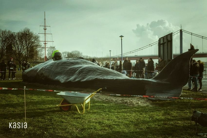 Whale Duisburg Germany People Petsandanimals Rhein Ruhrort