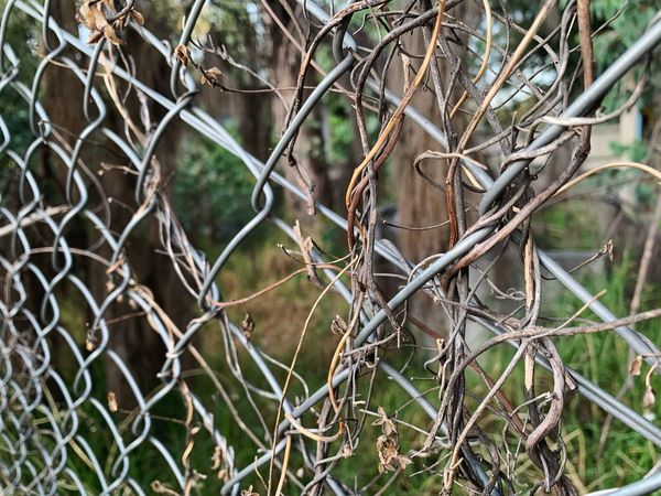 Rejas Focus On Foreground Full Frame Outdoors Boundary Metal Security Barrier Close-up Backgrounds Growth Branch Protection Safety