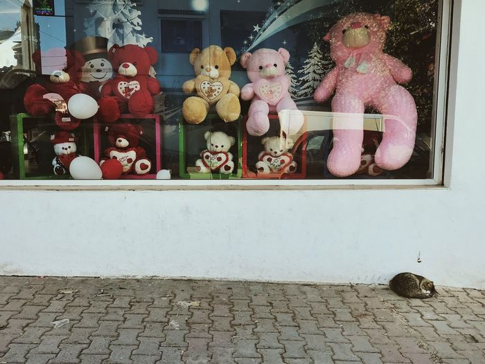 Stuffed toy by window against wall