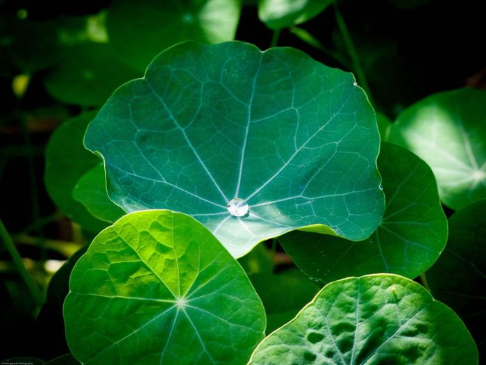 Green Green Leaves Greenery Greenery Scenery Nature Plant Plants Sunny Leaves