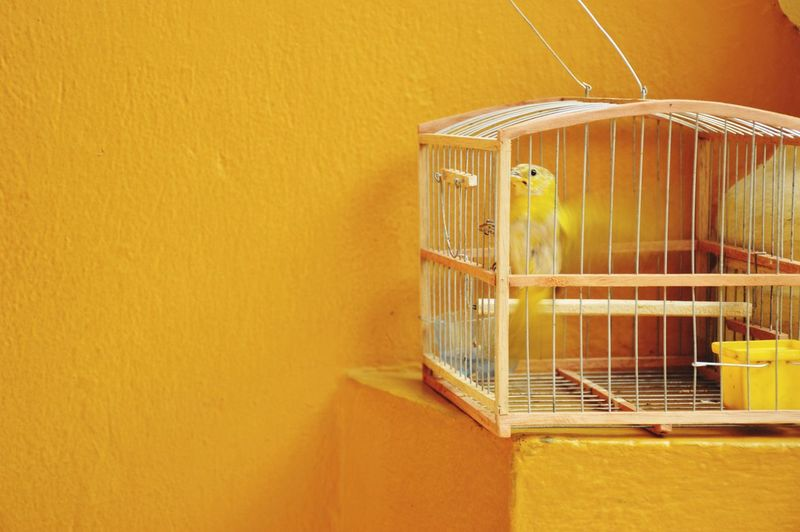 Bird Cage Yellow Color Caged Bird Bright Colors