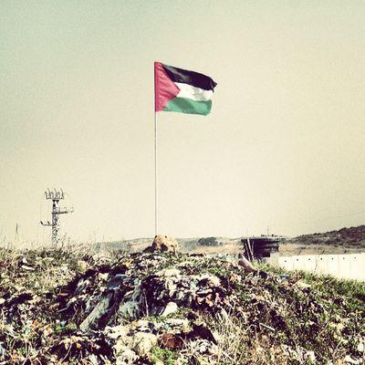 Gaza Palestine Israel Israelimoment ايرز beautiful black