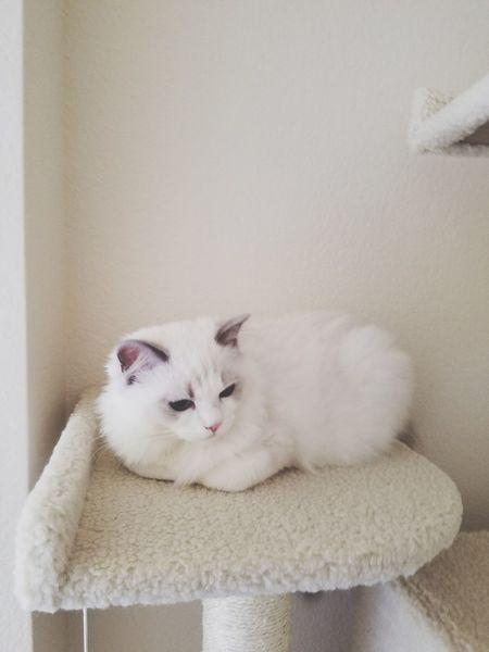EyeEmNewHere Cat Pets Beauty Feline Animal Kitten Cute Domestic Cat