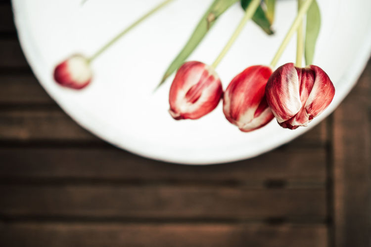 Close-Up Of Tulips On Table