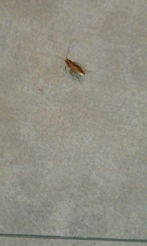 the roach that almost crawled on Tara in footaction