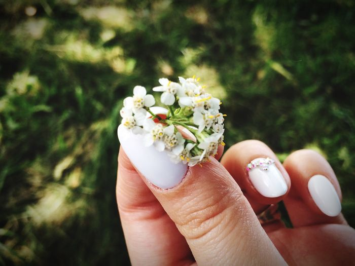 Close-Up Of Woman Hand Holding Flower
