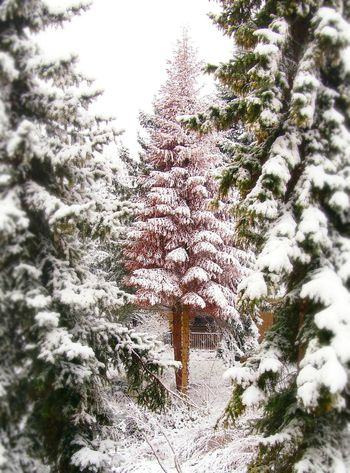 Dying beautifully lost in the middle - MAinLoveWithColors Winter Wonderland Snow Snowy Tree Dying Tree Lonely Loneliness