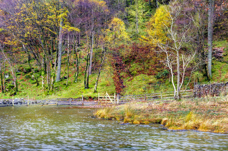 Scenic view of river in forest during autumn