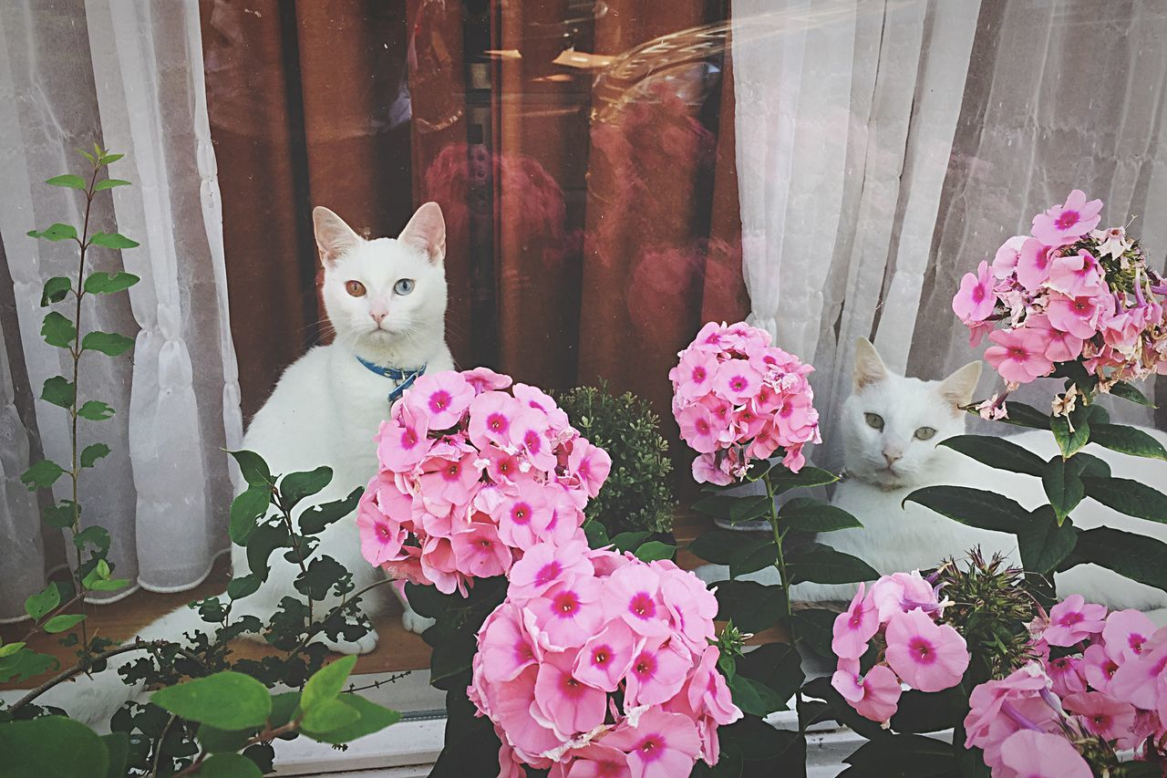 Two Cats In Flowers