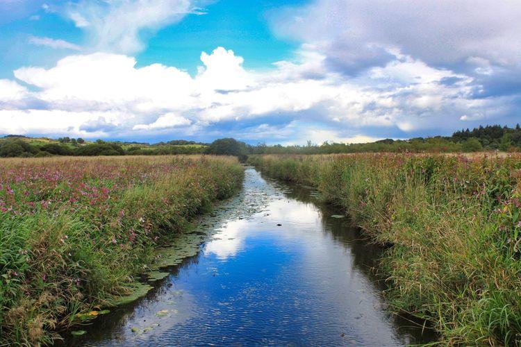 Water Flower Blue Beauty Tree Sky Landscape Cloud - Sky Farmland Blooming Growing Plant Life
