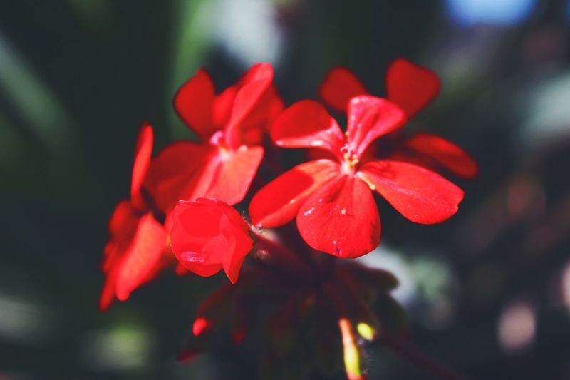 Red Flower Close-up Beauty In Nature Freshness Outdoors Petal Sagada, Philippines Philippines ❤️ Travel Photography