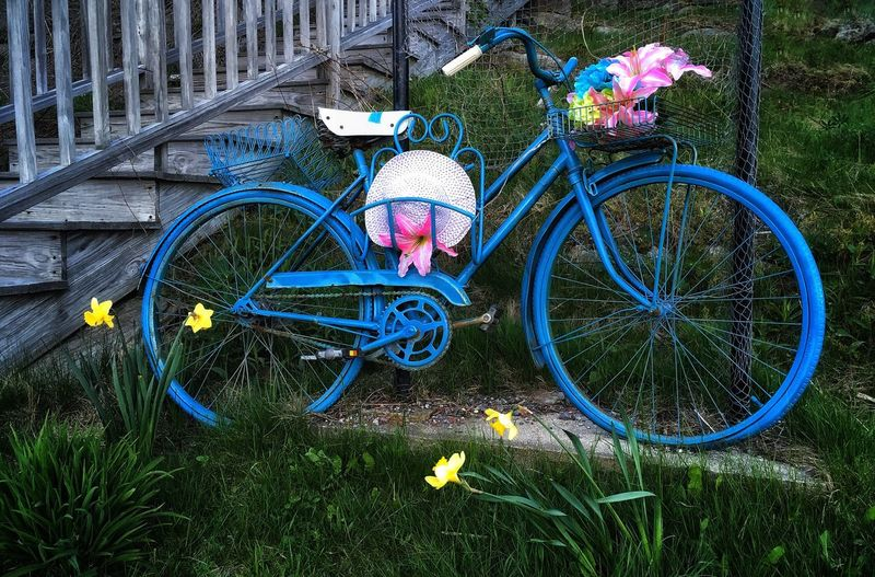 Bicycle Flower Blue Bicycle Basket Grass