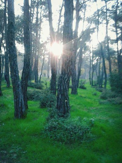 Denizli Behindthetrees Sun Forest